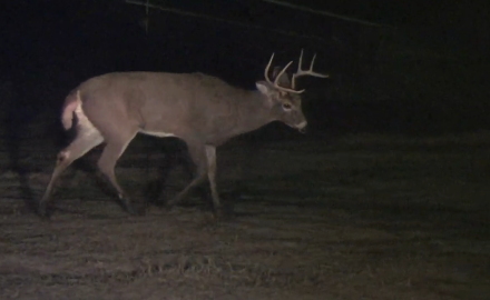 A Kansas buck is videotaped walking around in circles until he fell down, twice.  Find out why.