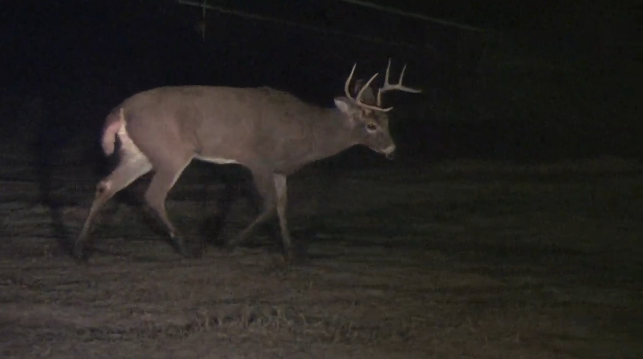 Muzzy Moment: A Buck Spinning in Cirlces