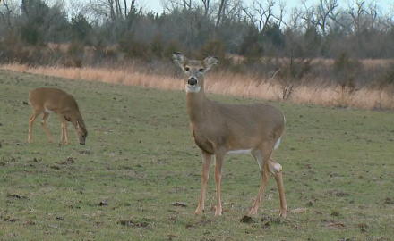 Dr. James Kroll offers his take on where you should aim when targeting a doe.