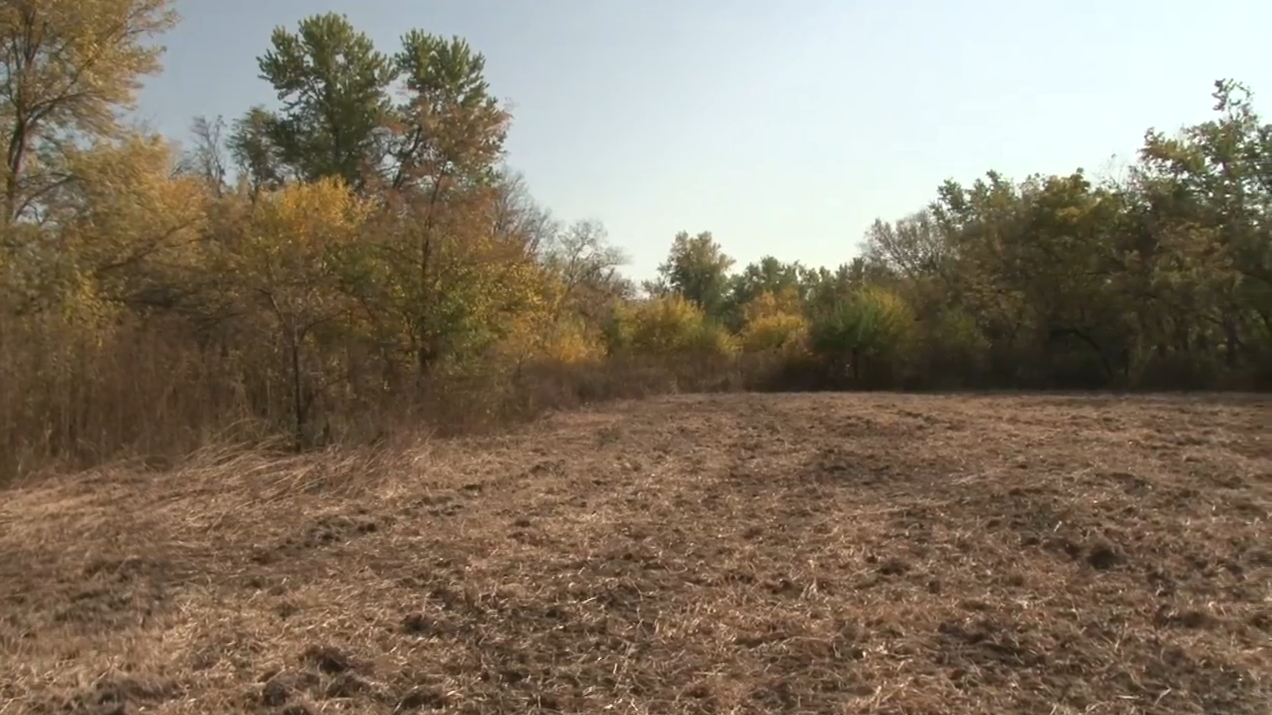 Deer Factory: Advice For Better Food Plots