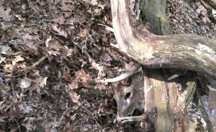 A Wisconsin hunter stumbles across a big buck that was crushed and killed by a tree.