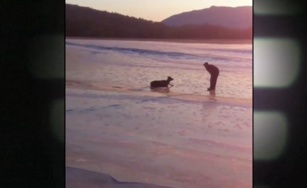 A Vermont man and his son rescue a doe stuck in frozen waters.