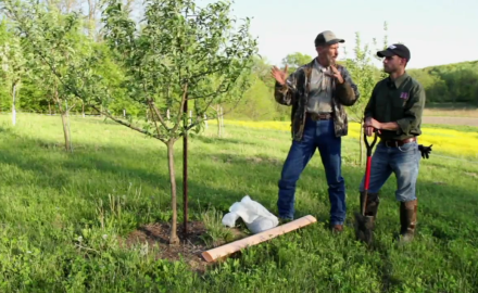 Dr. James Kroll discusses how to boost your mast crop.
