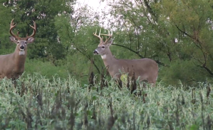 Mike Clerkin grabs his bow and heads to Missouri for a whitetail hunt.