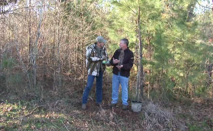 Whitetail deer like acorns, but they like chestnuts even more.  Dr. James Kroll talks with a tree
