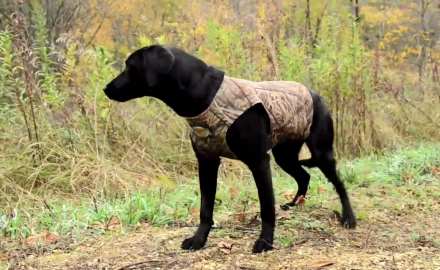 We take a look at ways of outfitting your deer dog during cold weather.