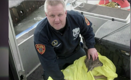 We highlight the story of how a couple of police officers saved a fawn from the frigid waters off