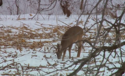 The North American Whitetail team takes a close look at the importance of late-season food sources