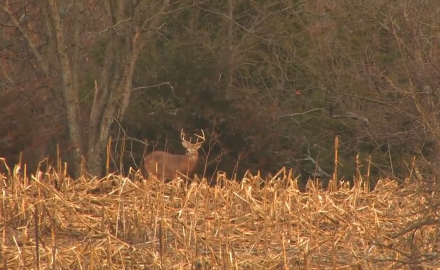 Mike Clerkin is in Missouri for the rifle season and aims his sights on a nice management buck.