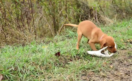 Jeremy Moore goes over tools used while training your deer dog.