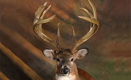 What makes a whitetail buck a legend?  Great size is the first criterion, but it's not always