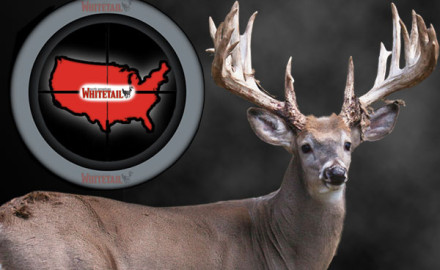 Hunters naturally love rankings: The 10 best bows for the year, the top 20 biggest typical bucks,