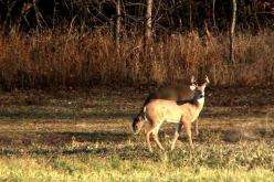 Late Season Illinois Muzzloader Hunt