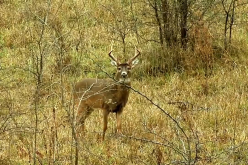 Trading in the Bow For a Muzzleloader