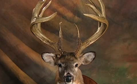 After 44 years of this deer head being lost, followed by many years of debate, a world record buck