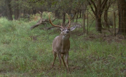 James Kroll is in Texas during the pre-rut.  He rattles in a pair of nice bucks.