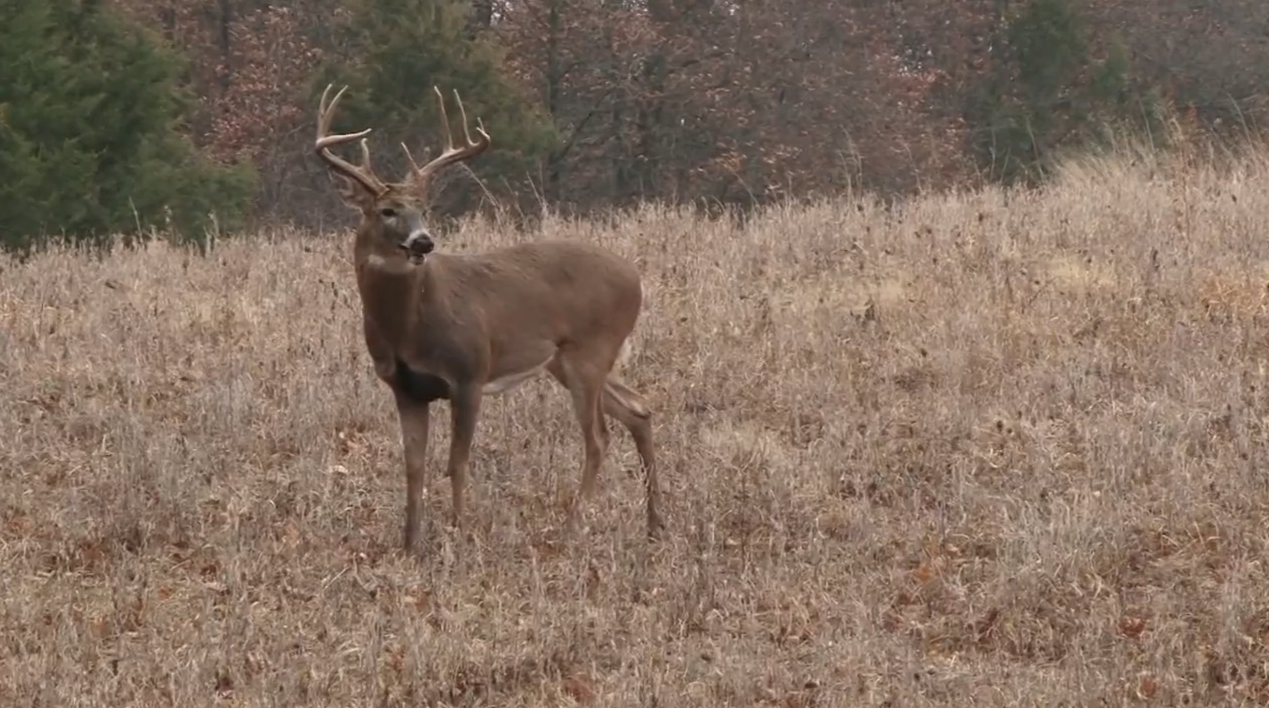 Rattling Bucks in Missouri