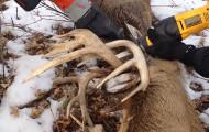 Minnesota Officer Uses Taser to Free Entangled Deer