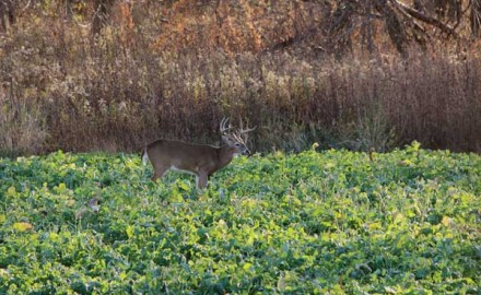 We can all agree that food plots are a tested and true way to grow bigger, healthier deer, and