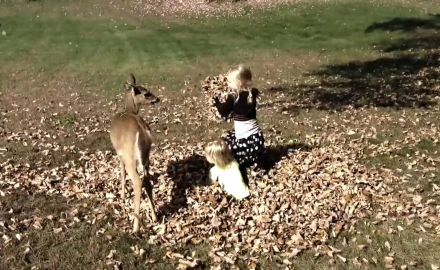 A Wisconsin hunter captures footage of a friendly fawn frollicking with his children.