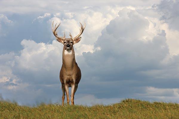 Best Fall Food Plot For Deer In Mississippi