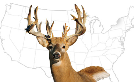 Ranging from Maine to Mexico and from the Northern Tier to the Deep South, whitetail deer are