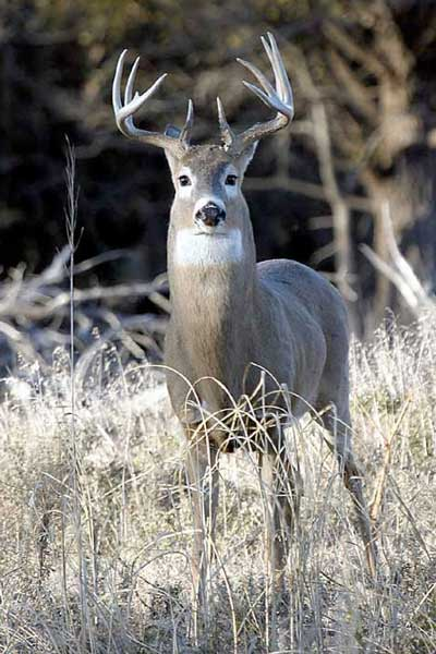 Deer Poacher Gets Hit with Jail Time