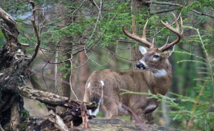 Relatively low deer numbers and thick, steep habitat can make public land in the Appalachians a