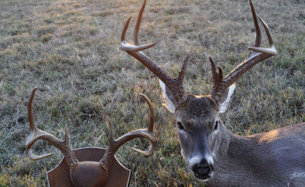 In November 2014, the author returned to the scene of his 1966 success and took a whitetail of