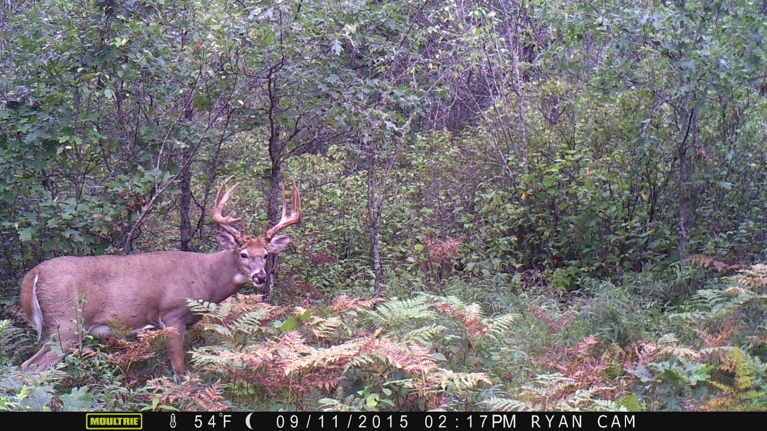 Huge 12 pointer on public land in Pembine, Wisconsin - North American ...