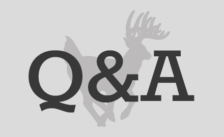 qa-deer