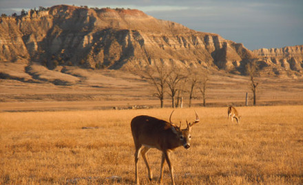 WB268,-Whitetail-buck-in-western-topography,-copyright-Mark-Kayser