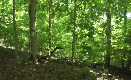 James Kroll and Pat Hogan offer strategic advice about managing your deer woods.