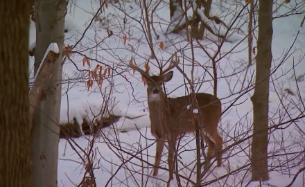 North American Whitetail's Gordon Whittington is on a late season muzzleloader hunt in Ohio and