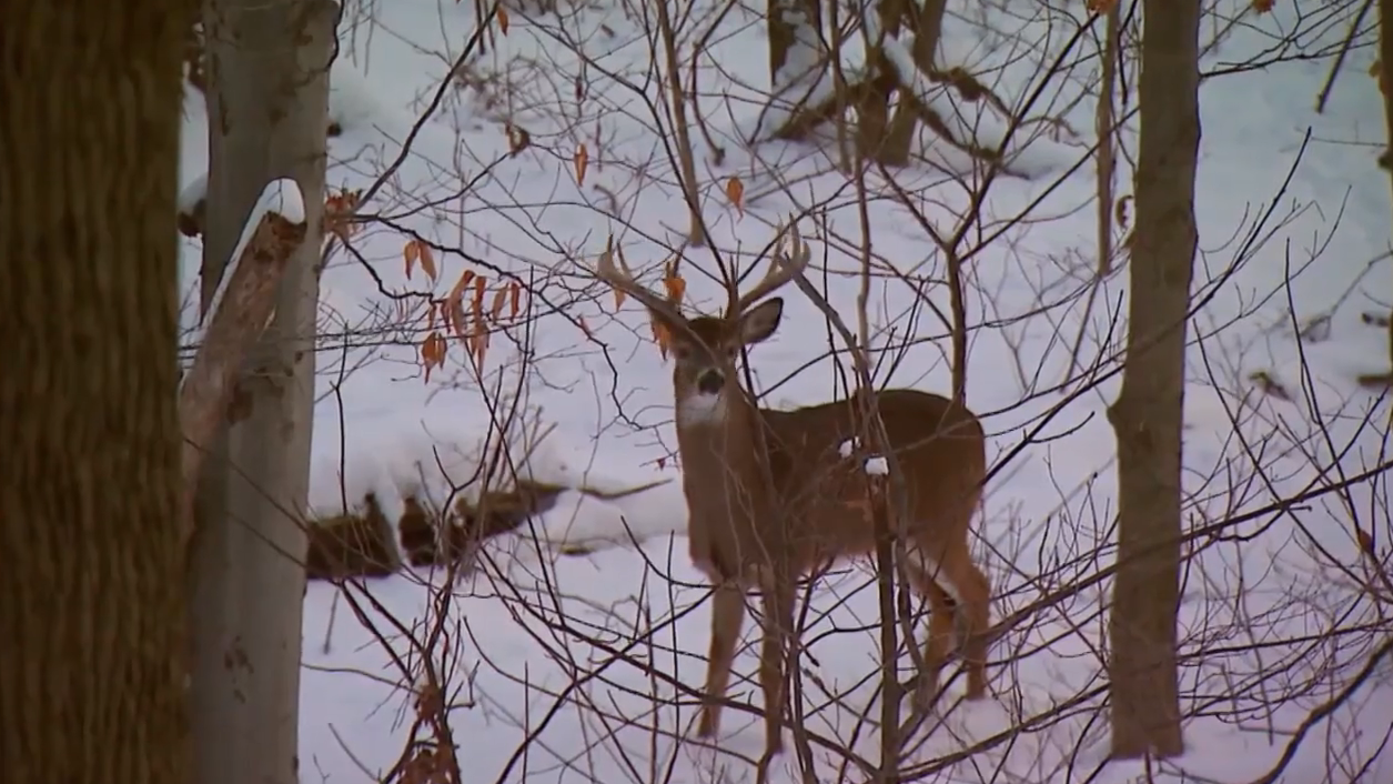 Late Season Muzzleloader Hunt Pays Off In Ohio