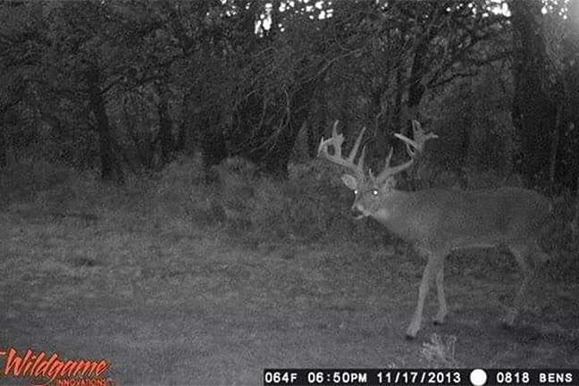 Oklahoma-big-buck