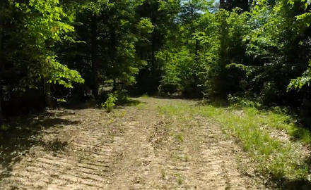 How to choose stand locations is one of the most critical components of any whitetail hunting