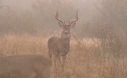 Two big whitetails go down on this action-packed segment from North American Whitetail TV.  Pat