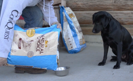 Jeremy Moore of Dog Bone offers some excellent hunting dog nutrition tips in this Deer Dogs