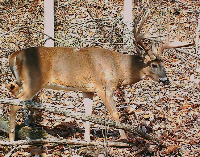West-virginia-state-record-whitetail-archery