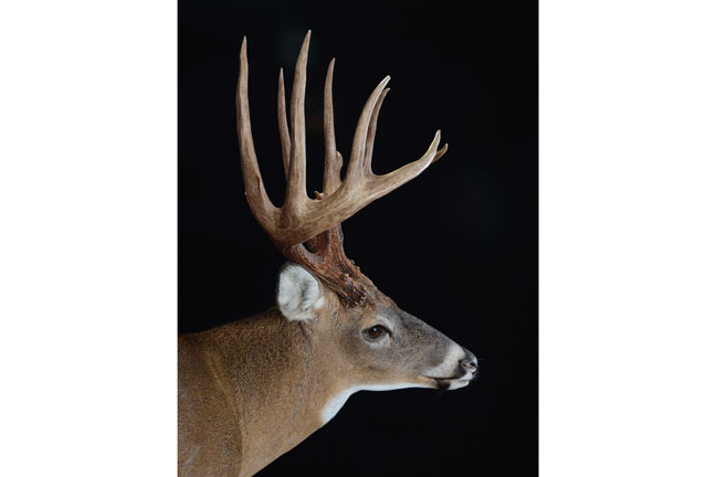 virginia-record-whitetail