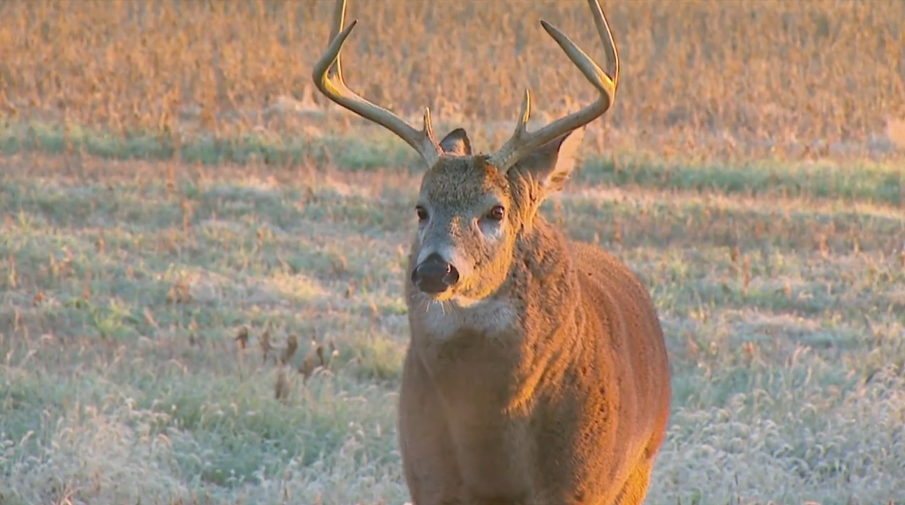Bowhunting Maryland: A Mature Buck Surprise
