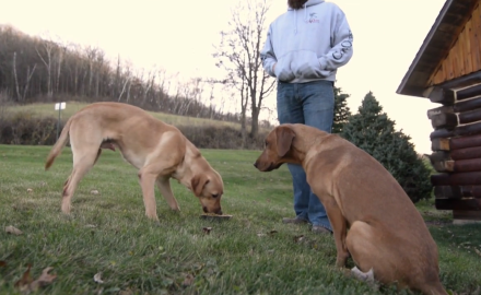 Jeremy Moore shares great advice on dealing with a common deer dog issue: Possessive behavior.  By