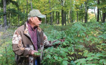 Here's what you need to know to determine if you have the food source to attract whitetails to your hunting property.