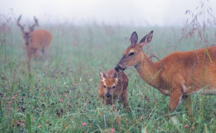 how-to-plant-a-no-till-food-plot deer