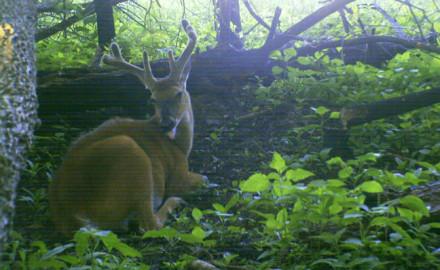 deer-bedding-areas