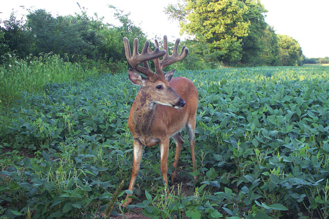 Killing Mature Bucks Requires a Learning Curve