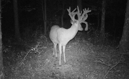 I was flat-out thrilled. I'd been watching the does and the 140-inch 3 1/2-year-old buck for the