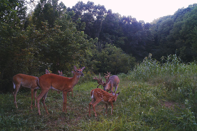 trail-camera-tactics-for-whitetail