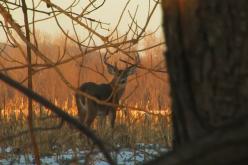 decline in deer habitat